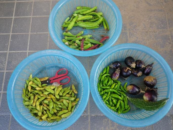 収穫14_09_30