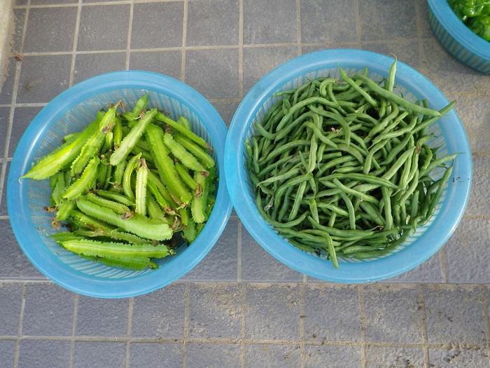 収穫3_14_10_04
