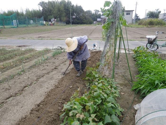 水菜の種蒔き1_14_10_12