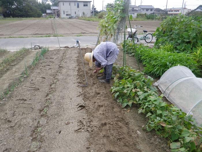 水菜の種蒔き2_14_10_12
