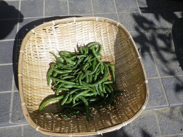 収穫4_14_10_19