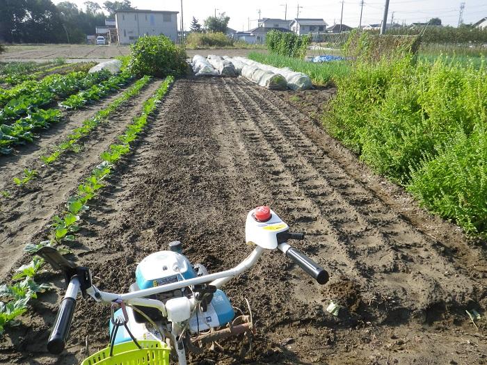レタス畑1_14_10_25