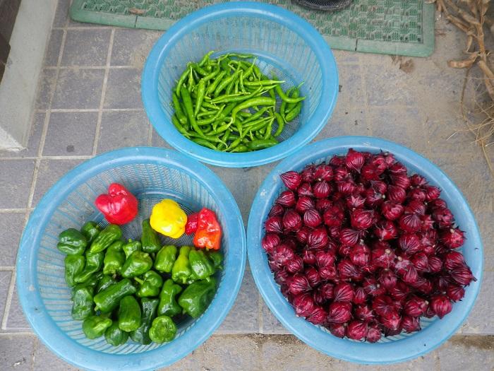 収穫果菜類14_11_02