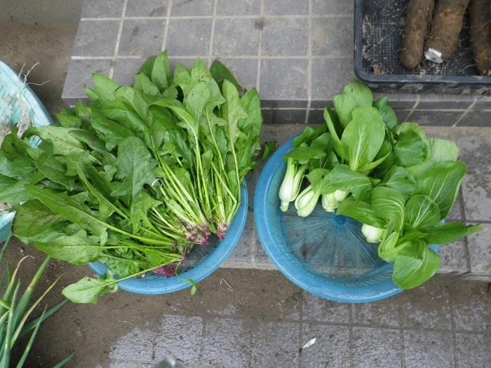 収穫葉物14_11_02