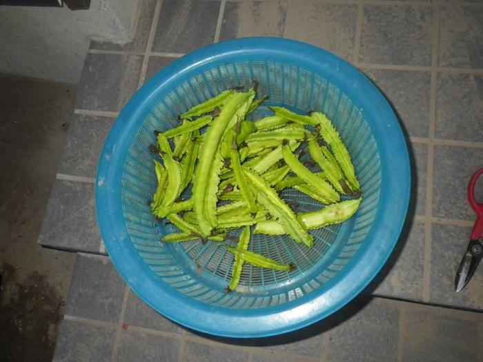 収穫14_11_04