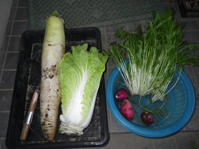 収穫14_11_05