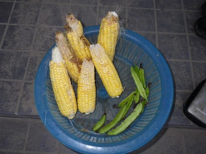 収穫14_11_06