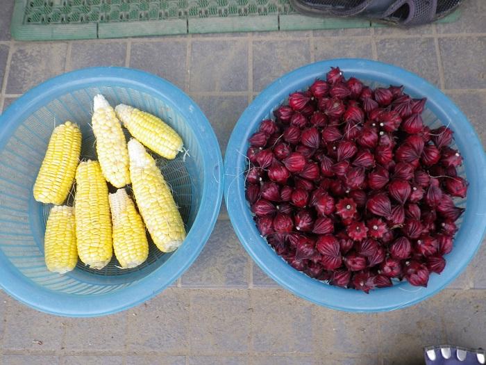 収穫1_14_11_08