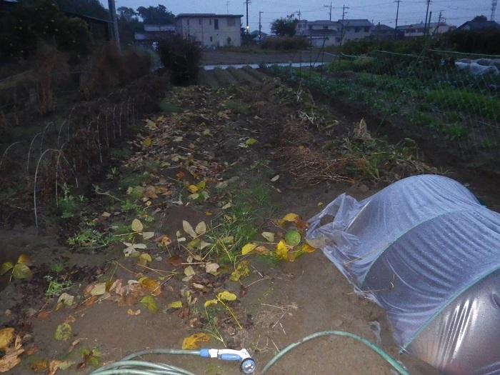 豆畑撤収14_11_09