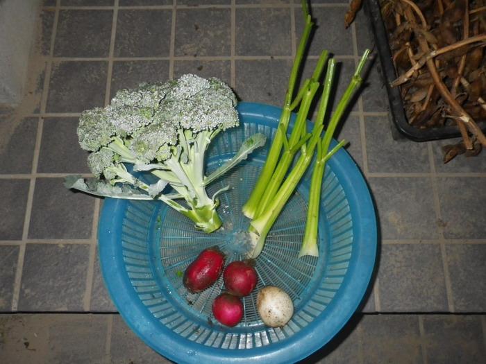 収穫14_11_18