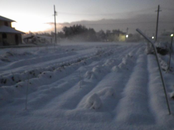 雪景色14_12_18