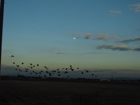 運動公園の野鳥 171