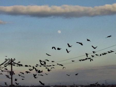 運動公園の野鳥 143