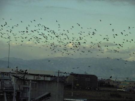 運動公園の野鳥 114