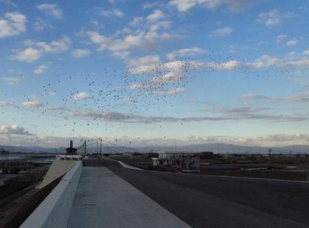 運動公園の野鳥 087