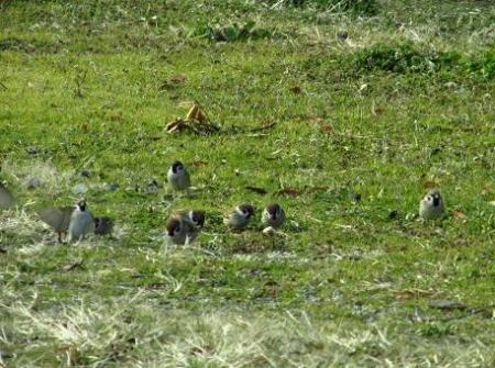 運動公園の野鳥 038