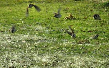 運動公園の野鳥 039
