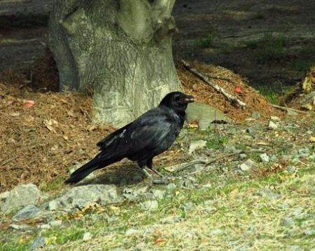 運動公園の野鳥 028