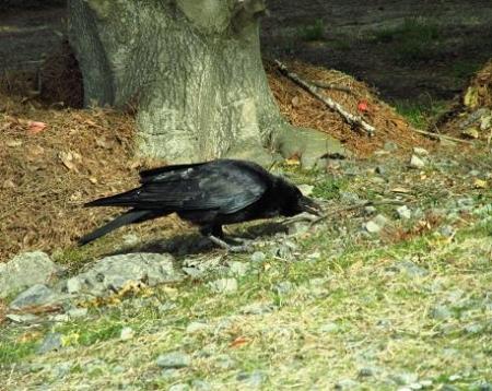 運動公園の野鳥 027