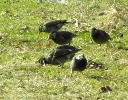 運動公園の野鳥 057