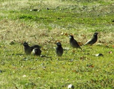 運動公園の野鳥 055