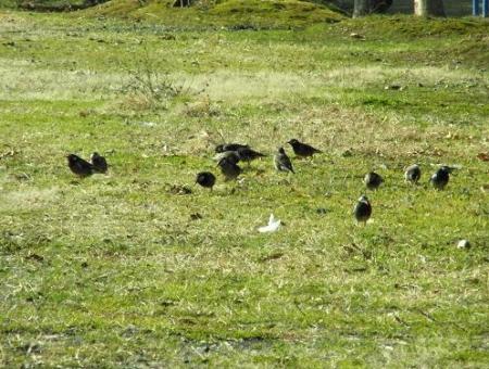 運動公園の野鳥 056