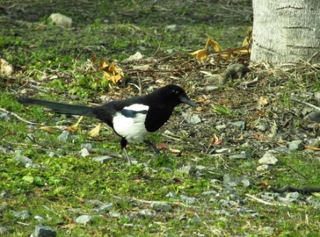 運動公園の野鳥 005
