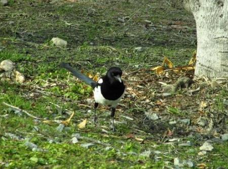 運動公園の野鳥 004