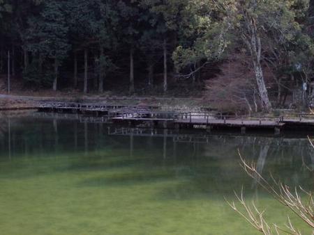 池 カイツブリ 090