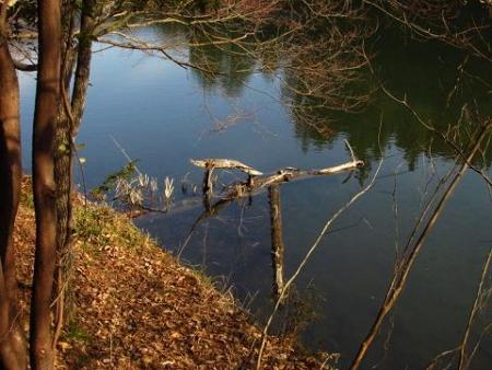 池 カイツブリ 088