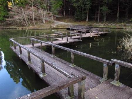 池 カイツブリ 125