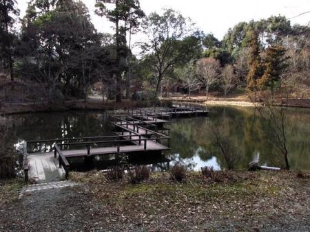 池 カイツブリ 132
