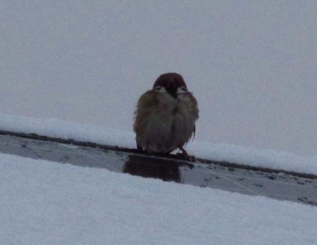 雪の朝 012