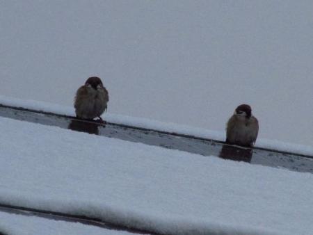 雪の朝 010