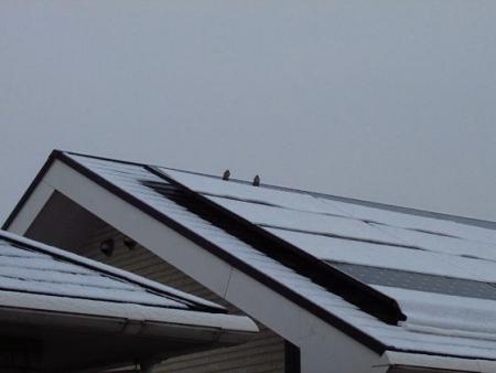 雪の朝 008