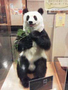 パンダのジェイフェ君