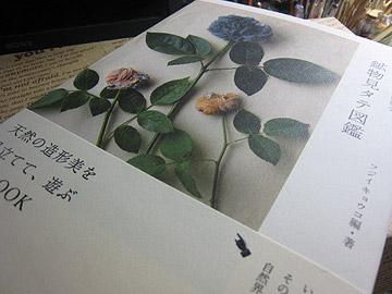 fb-520.jpg