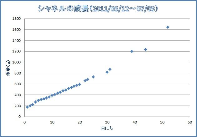 20110703シャネルの成長