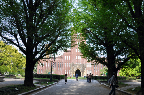 東京大学銀杏並木