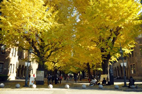 東京大学の銀杏並木