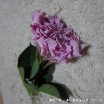 112_convert_20100507203056.jpg