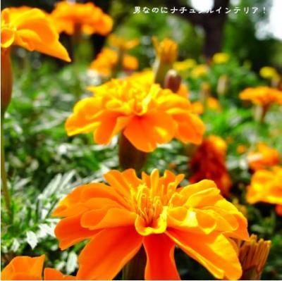 468_convert_20101020214024.jpg