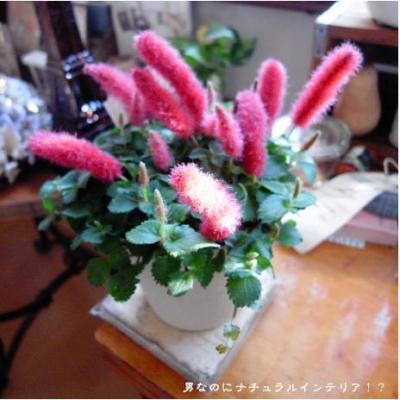 513_convert_20101104185810.jpg