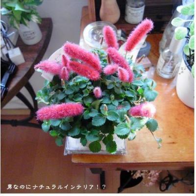 515_convert_20101104185841.jpg
