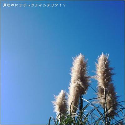 537_convert_20101111015118.jpg