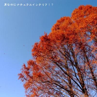 736_convert_20110104000821.jpg