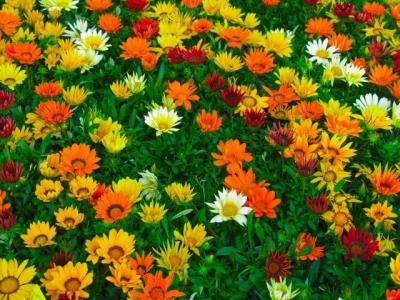 iroiro花