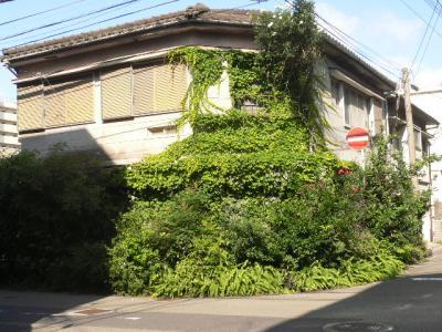 緑に蝕まれる家