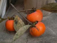 2011年11月13日 渋柿1