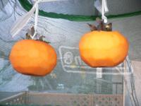 2011年11月15日 渋柿2